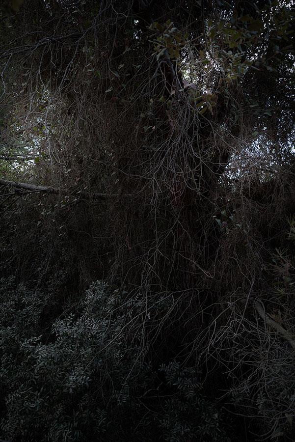 Sorin_Morar_tiefenwald600