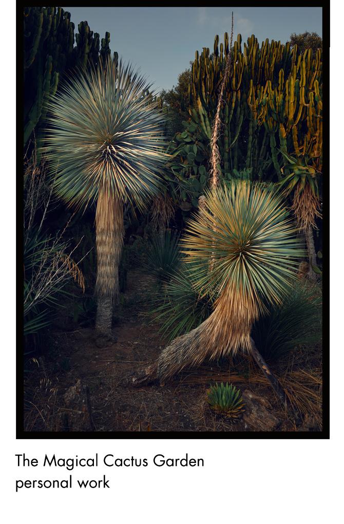 The Magical Cactus Garden